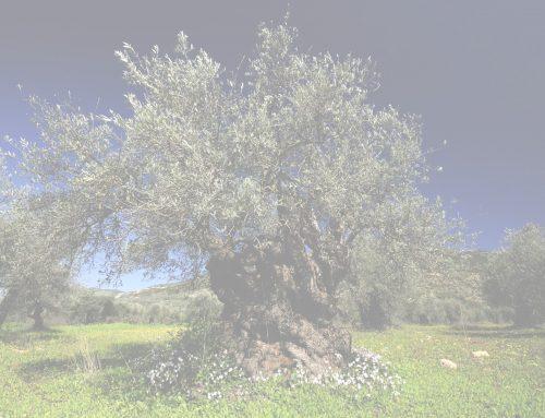"""Xylella, """"La ricerca sia pluralistica e autonoma"""": l'appello del Forum ambiente e Salute"""
